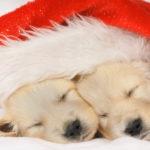 Zahnlinge in den Weihnachtsferien